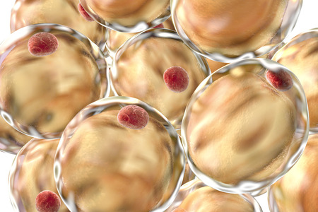 lipid a: Fat cells, adipose cells, adipocytes. 3D illustration showing presence of big lipid droplet yellow inside the cell. The red structure is nucleus Stock Photo