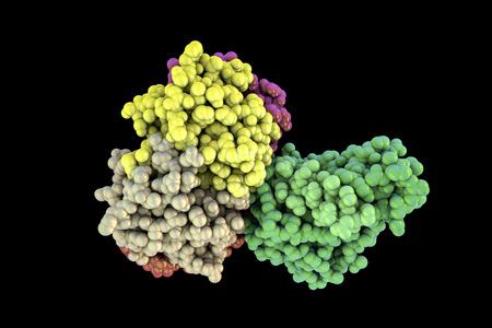 vibrio: Molecular model of cholera toxin choleragen, 3D illustration. A toxin produced by bacterium Vibrio cholerae that pays crucial role in cholera disease Stock Photo