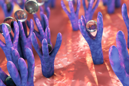 microscopic cellular structure: Cellular membrane with receptors and molecules coming to receptors, 3D illustration Stock Photo