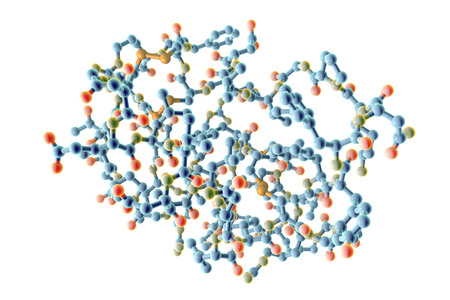 Insulin-like growth factor IGF, molecular model, 3D illustration. IGF is a protein playing important role in aging, cancer and diabetes