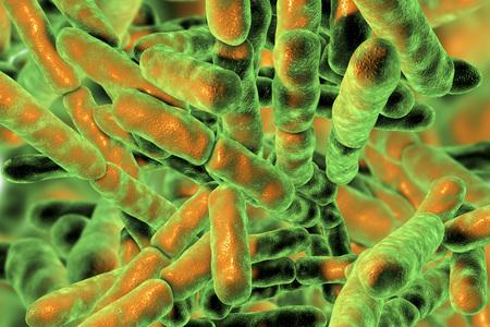 Bacteriën Bifidobacterium, grampositieve anaerobe staafvormige bacteriën die deel uitmaken van de normale flora van de menselijke darm, worden gebruikt als probiotica en bij de productie van yoghurt. 3D illustratie