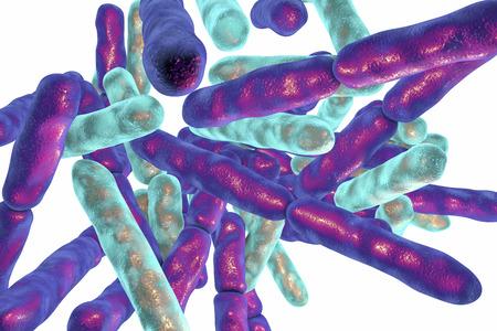 白い背景に分離された細菌ビフィズス菌、プロバイオティクスとヨーグルト生産人間の腸の正常な細菌叢の一部である細菌が使われます。3 D イラス
