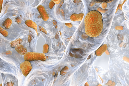 Biofilm of bacterium Acinetobacter baumannii, 3D illustration. Acinetobacter is antibiotic resistant rod-shaped bacterium which causes hospital-acquired infections Imagens