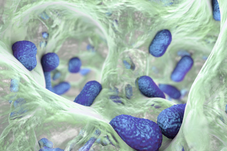 medical fight: Biofilm of bacterium Acinetobacter baumannii, 3D illustration. Acinetobacter is antibiotic resistant rod-shaped bacterium which causes hospital-acquired infections Stock Photo