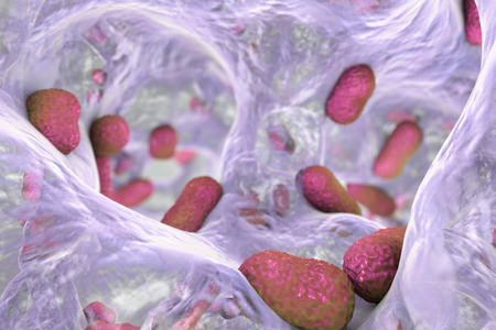 Biofilm of bacterium Acinetobacter baumannii, 3D illustration. Acinetobacter is antibiotic resistant rod-shaped bacterium which causes hospital-acquired infections Reklamní fotografie