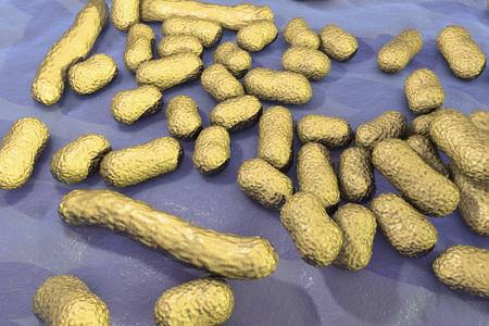 filamentous: Bacterium Acinetobacter baumannii, multidrug resistant nosocomial bacterium. 3D illustration shows morphology of Acinetobacter such as short rods and sometimes long filamentous cells