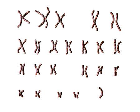 mutation: Turner s-syndrome karyotype, unlabeled. X0 karyotype. 3D illustration Stock Photo