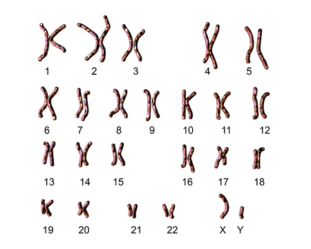 Normal human male karyotype, labeled. 3D illustration
