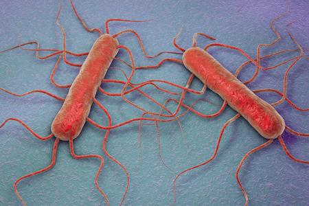Ilustración 3D de la bacteria Listeria monocytogenes, una bacteria gram-positiva con flagelos que causa la listeriosis Foto de archivo - 71355182