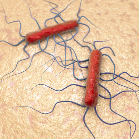 listeria: 3D illustration of bacterium Listeria monocytogenes, gram-positive bacterium with flagella which causes listeriosis