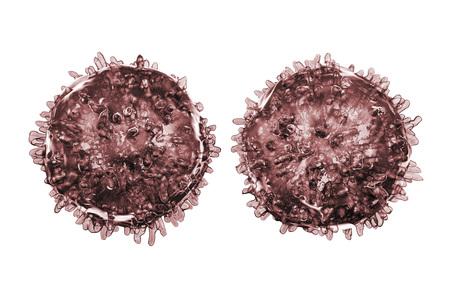 B- and T-lymphocytes. Immune cells isolated on white background. 3D illustration Stock Photo