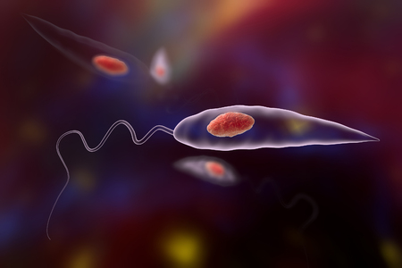 liver cells: Promastigotes of Leishmania parasite which cause leishmaniasis, 3D illustration Stock Photo