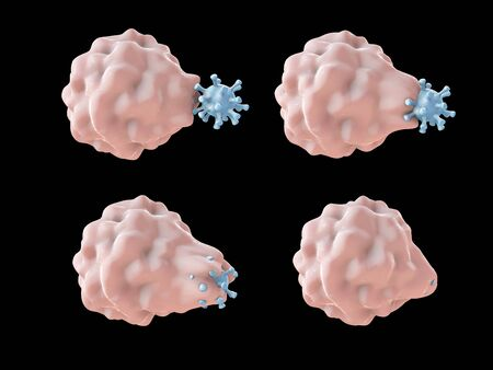 macrophages: White blood cell engulfing a virus, 3D illustration showing stages of phagocytosis