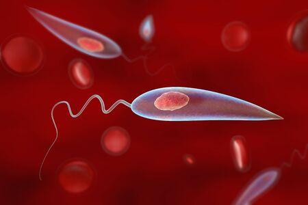 protozoan: Promastigotes of Leishmania parasite which cause leishmaniasis, 3D illustration Stock Photo