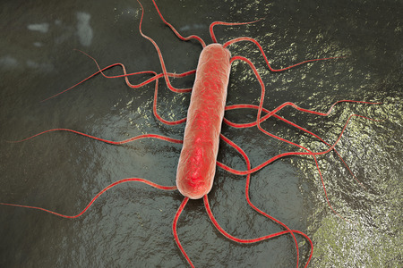 3D illustration of bacterium Listeria monocytogenes, gram-positive bacterium with flagella which causes listeriosis