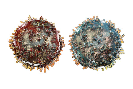 leukocyte: B- and T-lymphocytes. Immune cells isolated on white background. 3D illustration Stock Photo