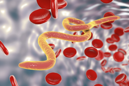 ascaris: Parasitic worms in blood, 3D illustration. Can be used to illustrate Ascaris, Toxocara, microfilaria and other worms Stock Photo