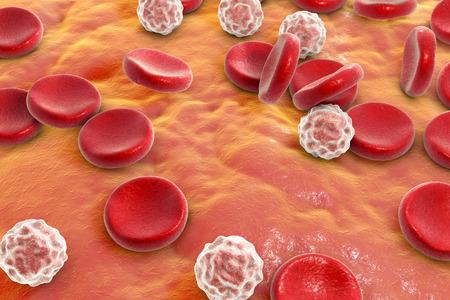 vascular: Blood cells: red blood cells erythrocytes and white blood cells leukocytes . 3D illustration
