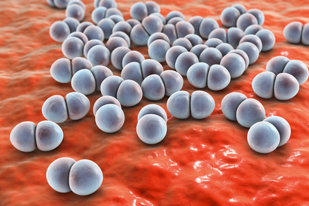 Bacteria pneumococci, Streptococcus pneumoniae, gram-positive spherical bacteria, diplococci which cause pneumonia, 3D illustration