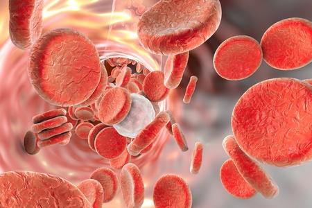 Blood cells: red blood cells erythrocytes and leukocytes. 3D illustration
