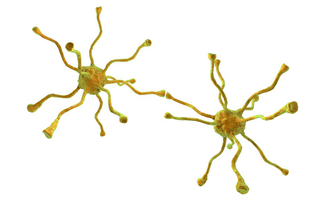 neuronal: Neuronal synapses, network of neurons, brain cells isolated on white background. 3D illustration Stock Photo