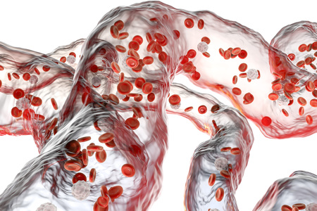 capillaries: Network of blood vessels, capillaries with flowing blood cells isolated on white background, 3D illustration