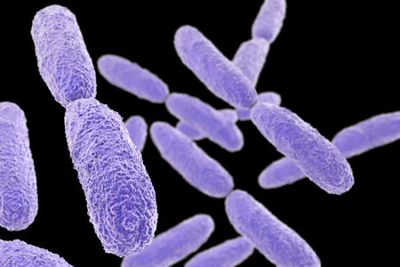 black gram: Bacteria Klebsiella isolated on black background, 3D illustration. Gram-negative rod-shaped bacteria which are often nosocomial antibiotic resistant Stock Photo