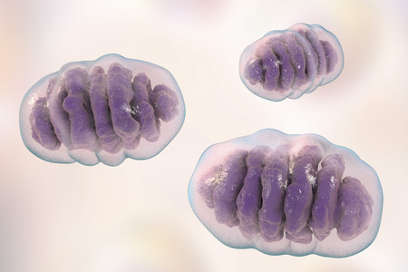 eukaryote: Mitochondria, a membrane-enclosed cellular organelles, which produce energy, 3D illustration