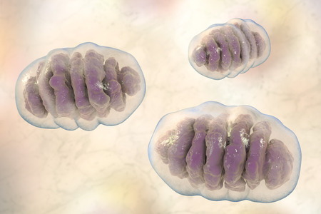 Mitochondria, a membrane-enclosed cellular organelles, which produce energy, 3D illustration
