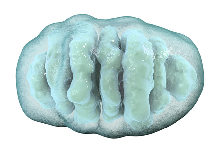 Mitochondrion isolated on white background, a membrane-enclosed cellular organelle which produces energy, 3D illustration Stock Photo
