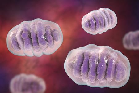 膜で囲まれた細胞細胞器官、3 D イラストレーション エネルギーを生み出すミトコンドリア