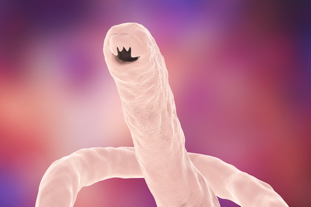 parasite: Head of a parasitic hookworm Ancylosoma, 3D illustration. Ancylostoma duodenale can infect humans, dogs and cats, its head has several tooth-like structures