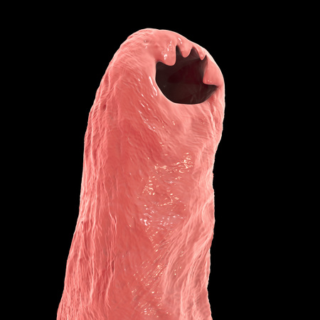 Head of a parasitic hookworm Ancylosoma isolated on black background, 3D illustration. Ancylostoma duodenale can infect humans, dogs and cats, its head has several tooth-like structures Stock Photo
