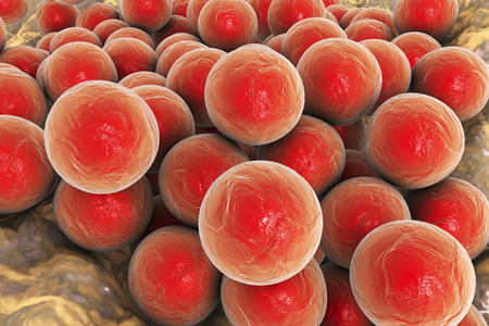 Bacteria Staphylococcus aureus MRSA on the surface of skin or mucous membrane, 3D illustration