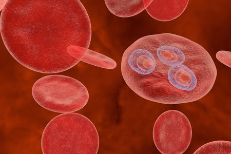 Malaria. Plasmodium vivax in early trophozoite ring stage inside red blood cell, 3D illustration Stock Photo