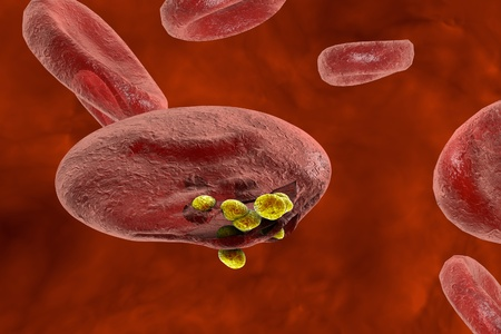 Malaria. Release of malaria parasites from red blood cell. Merozoites, 3D illustration Standard-Bild