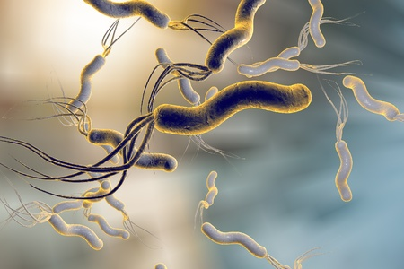 3D illustration of Helicobacter pylori, bacterium which causes gastric and duodenal ulcer Stockfoto