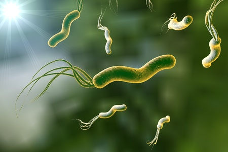 3D illustration of Helicobacter pylori, bacterium which causes gastric and duodenal ulcer Stock Photo