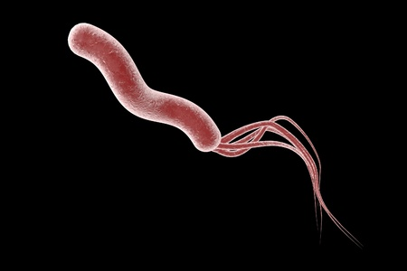 duodenal: 3D illustration of Helicobacter pylori, bacterium which causes gastric and duodenal ulcer Stock Photo