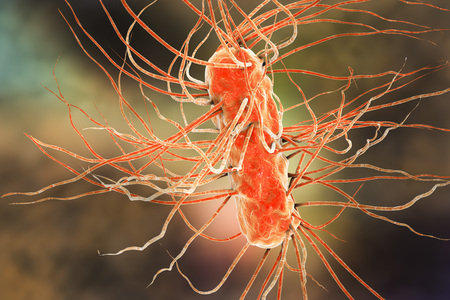 escherichia coli: Escherichia coli bacterium, 3D illustration. Gram-negative bacterium with peritrichous flagella which is part of normal intestinal microflora and also causes enteric and other infections