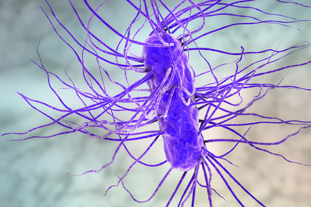 escherichia: Escherichia coli bacterium, 3D illustration. Gram-negative bacterium with peritrichous flagella which is part of normal intestinal microflora and also causes enteric and other infections