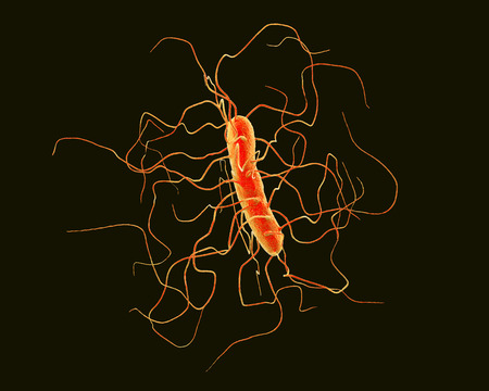 Clostridium difficile bacterium isolated on black background, 3D illustration. Bacteria which cause pseudomembraneous colitis and are associated with nosocomial antibiotic resistance