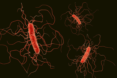 tetanus: Clostridium difficile bacteria isolated on black background, 3D illustration. Bacteria which cause pseudomembraneous colitis and are associated with nosocomial antibiotic resistance