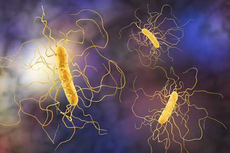 Clostridium difficile bacteria, 3D illustration. Bacteria which cause pseudomembraneous colitis and are associated with nosocomial antibiotic resistance Фото со стока