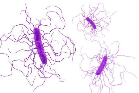 Clostridium difficile 박테리아 흰색 배경에, 3D 그림을 격리합니다. 위 막성 대장염을 유발하고 병원균 항생제 내성과 관련된 박테리아 스톡 콘텐츠