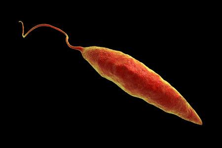 tropica: Promastigotes of Leishmania parasite which cause leishmaniasis isolated on black background, 3D illustration Stock Photo