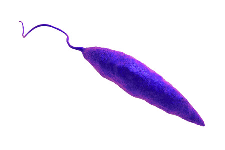 Promastigotes of Leishmania parasite which cause leishmaniasis isolated on white background, 3D illustration