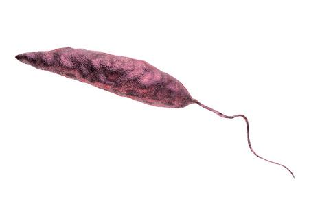 tropica: Promastigotes of Leishmania parasite which cause leishmaniasis isolated on white background, 3D illustration