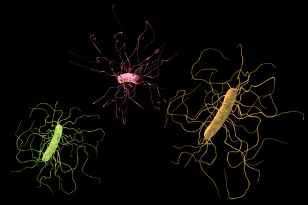 Clostridium difficile bacteria isolated on black background, 3D illustration. Bacteria which cause pseudomembraneous colitis and are associated with nosocomial antibiotic resistance