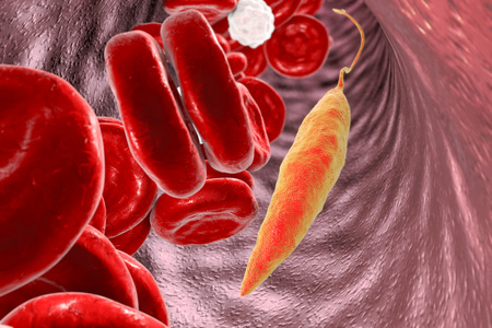 erythrocytes: Promastigotes of Leishmania parasite which cause leishmaniasis in blood with red blood cells and leukocytes, 3D illustration